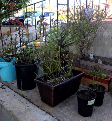 monarch_garden